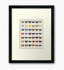 Butterflies of North America Framed Print