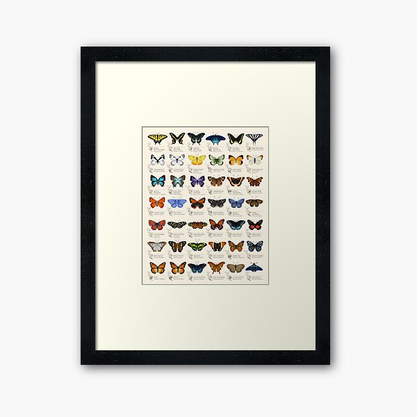 Butterflies of North America Framed Art Print