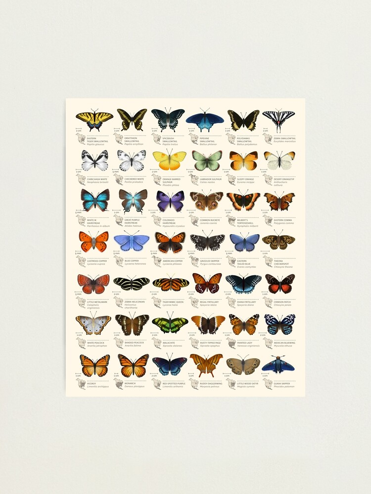 Alternate view of Butterflies of North America Photographic Print
