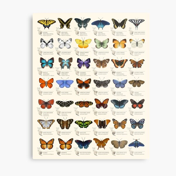 Butterflies of North America Metal Print
