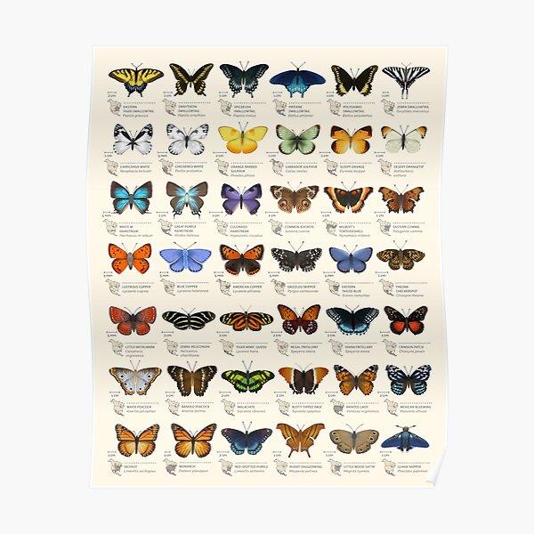 Papillons d'Amérique du Nord Poster