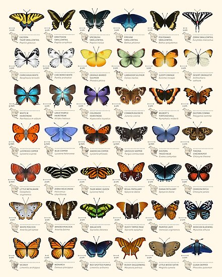 Butterflies of North America by Eleanor Lutz