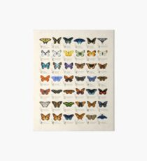Butterflies of North America Art Board
