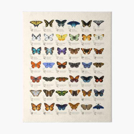 Butterflies of North America Art Board Print