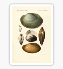 Études sur les mollusques terrestres et fluviatales du Mexique et du Guatemala  par Mm P Fischer et H Crosse 1902 066 Sticker