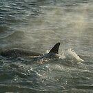 Orca Mist by jgregor