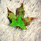 lonely leaf by Lindsey Downing