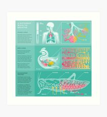 3 different ways to breathe Art Print