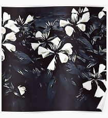 Beautiful flowers Poster