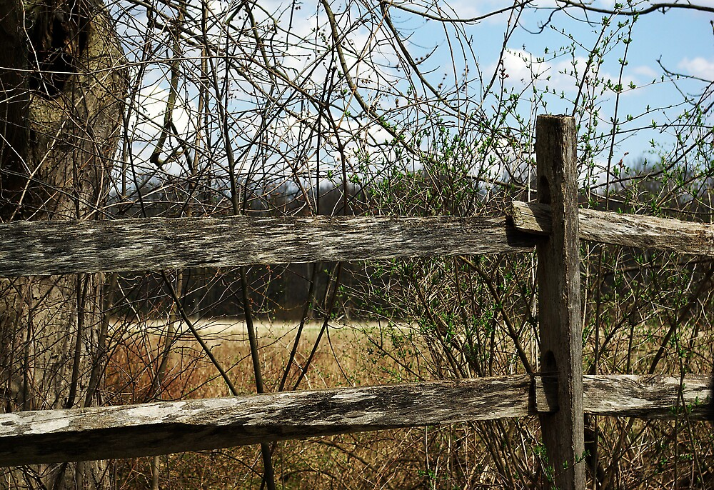 Weathered Fence by Jamie  Fox