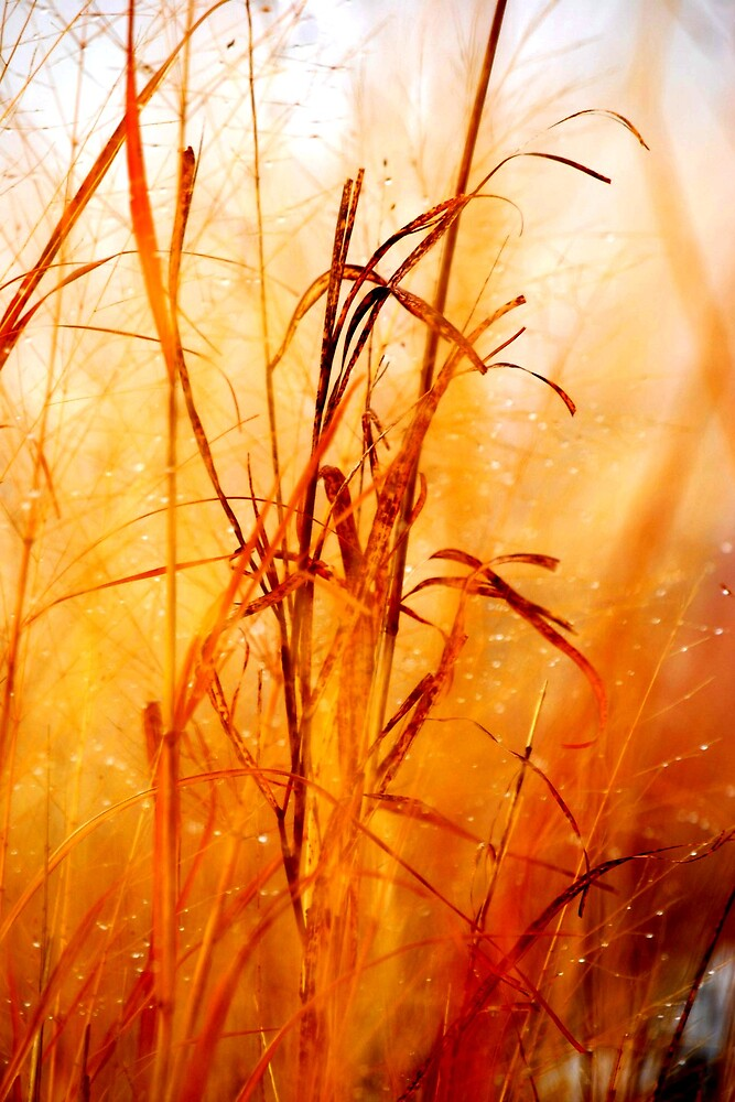 Winter tall grass #2 by marycloch