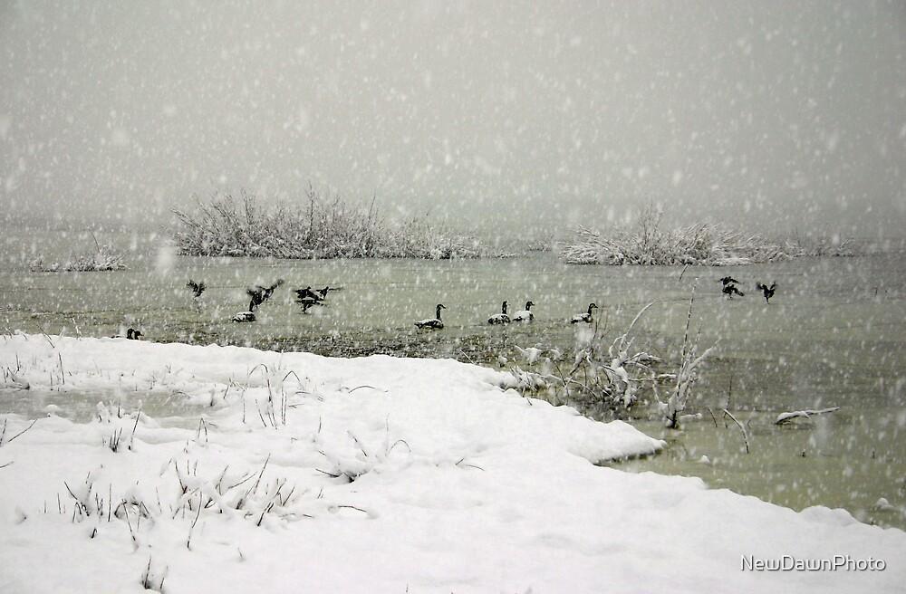 Frozen Geese by NewDawnPhoto