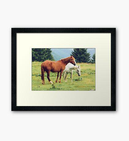 Romanian horses Framed Print