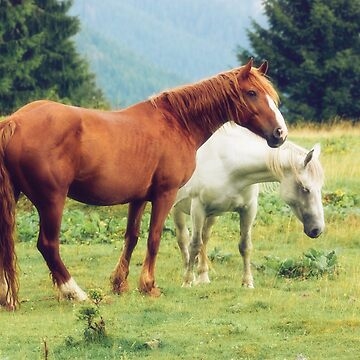 Romanian horses by domcia