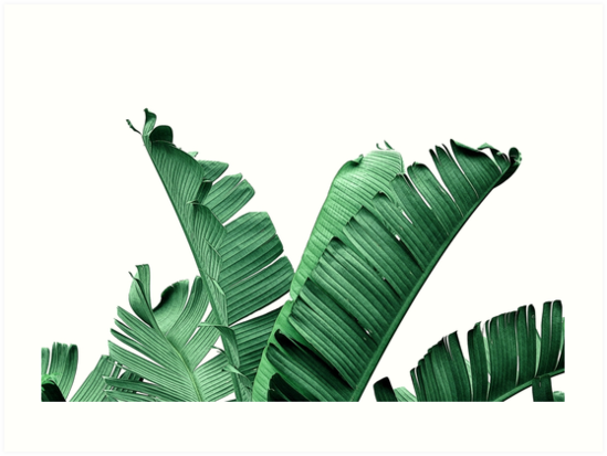 Quot Banana Leaves Quot Art Print By Nordikart Redbubble
