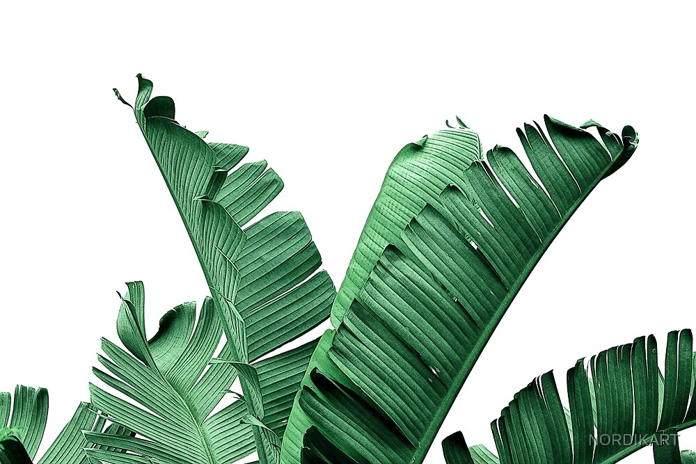 BANANA LEAVES  by NORDIKART