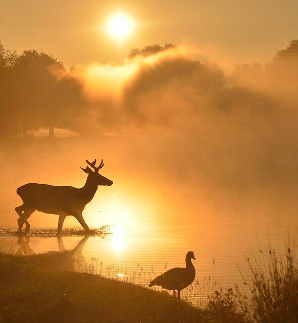 Misty Sunrise, Bushy Park, London by Kasia Nowak