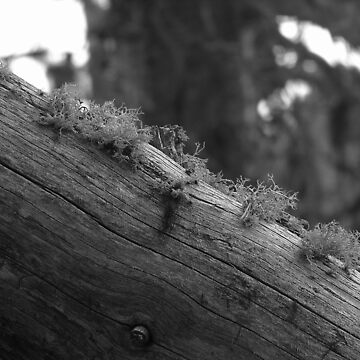 Moss Growing On a Log by HeyMike