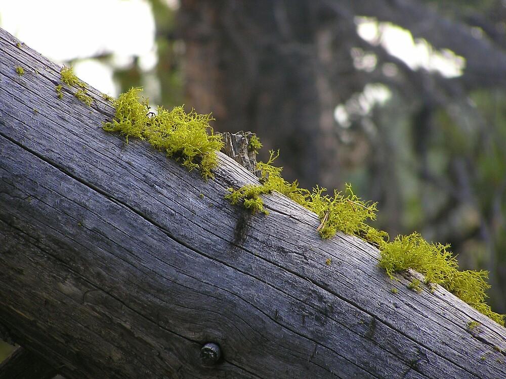 Moss Growing On a Log II by HeyMike