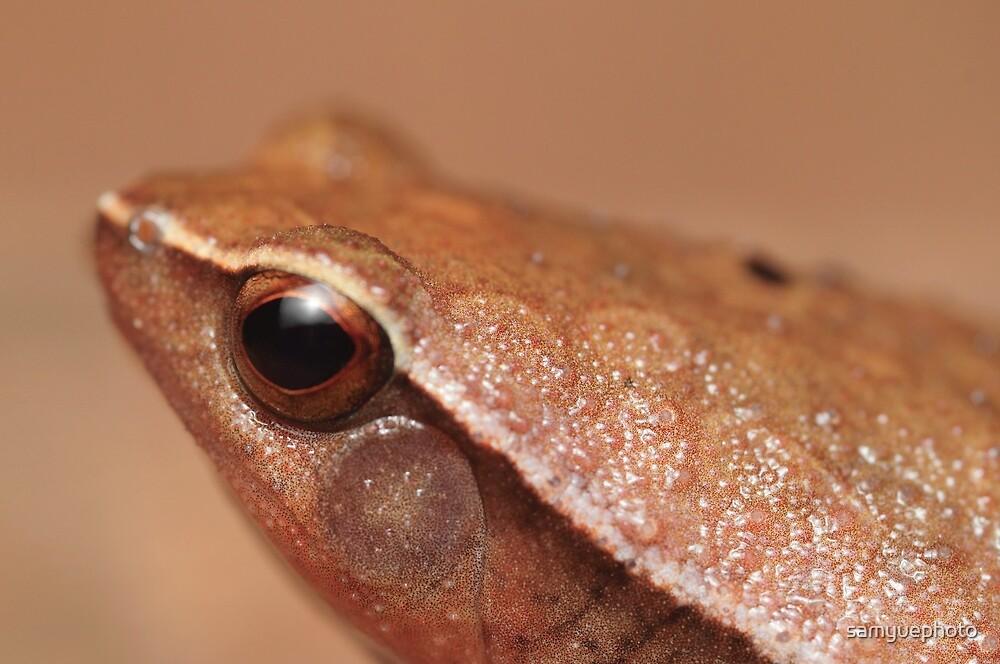 Dotted sticky frog Kalophrynus punctatus by samyuephoto