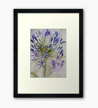 agapanthus bloom 'for the love of flowers' © 2007 patricia vannucci  Framed Print
