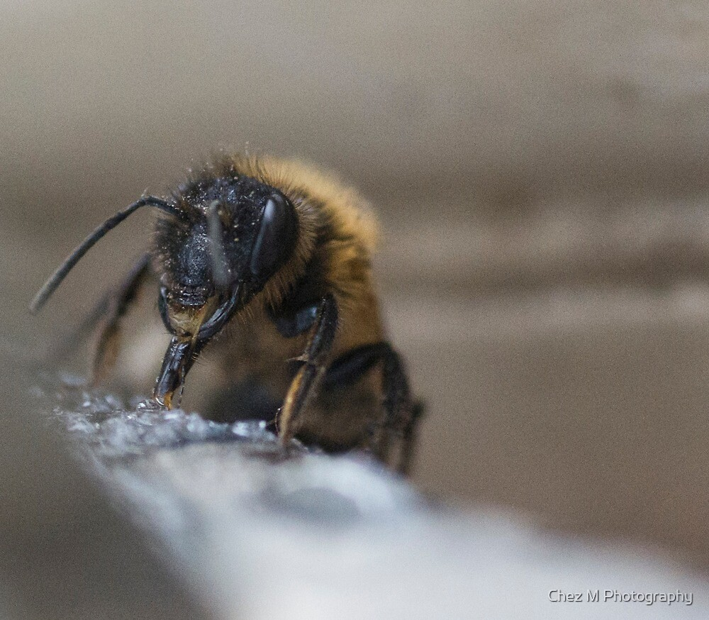 Save The Bees by Chez M Photography