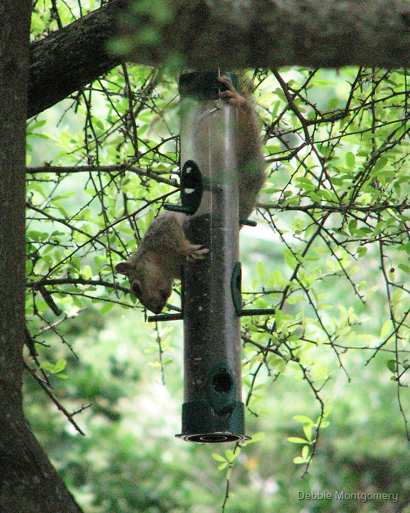 Nothing will stop a determined squirrel by Debbie Montgomery