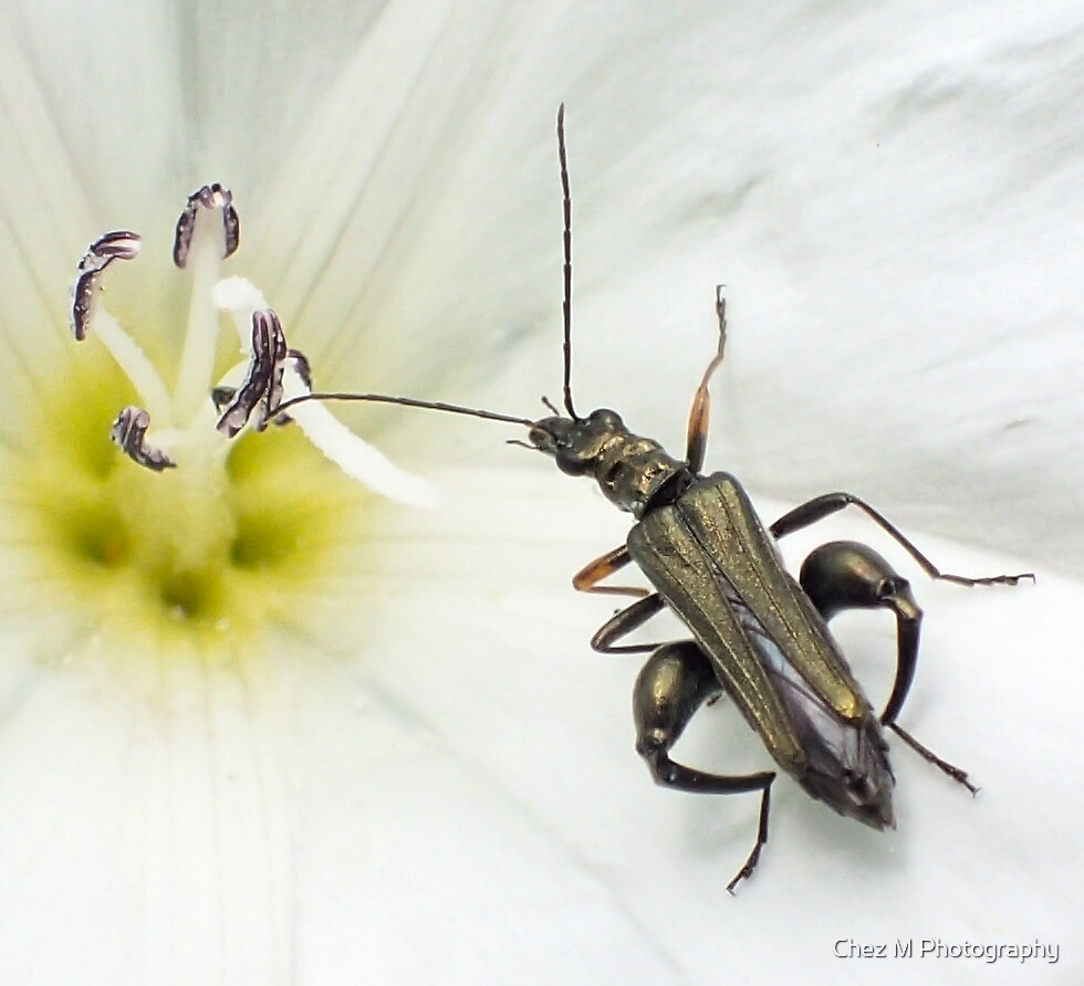 A Bug's Life by Chez M Photography