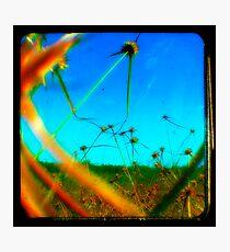I'M YELLING BLUE! Photographic Print