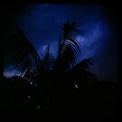 Holga madness......little palm and stormy sky by Juilee  Pryor