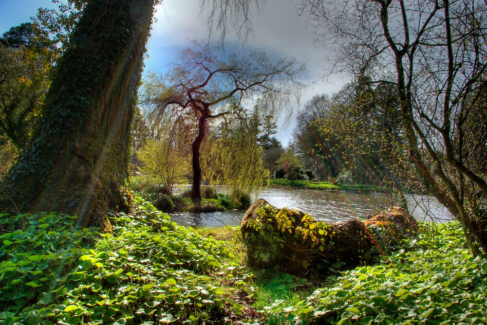Gardens, Trees and Water at Birr Castle Demense by Mark O'Toole
