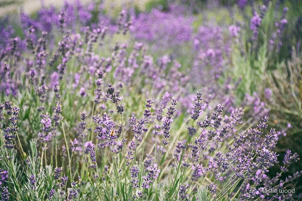 Lavender Farm series 1 by leslie wood