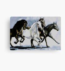 Wild Arabians Canvas Print