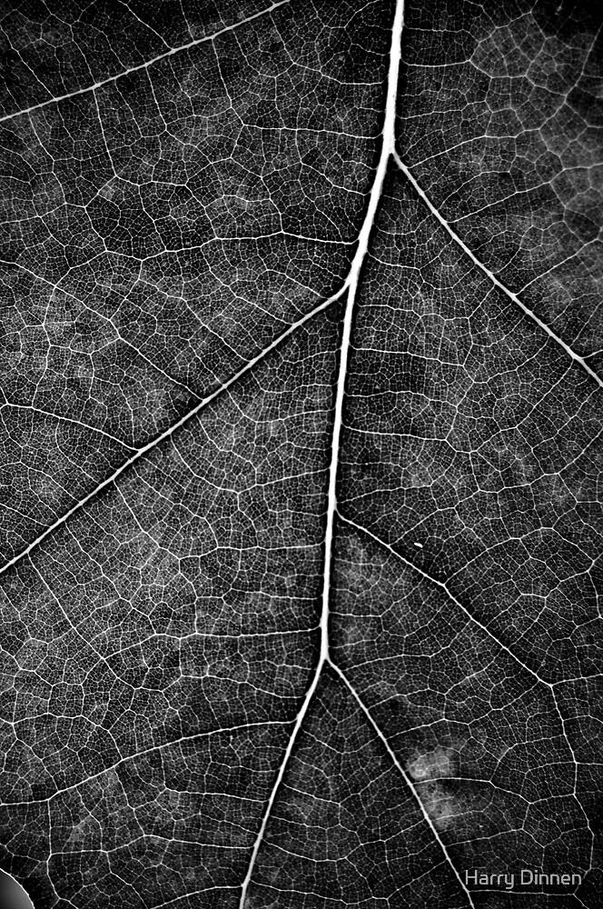 Autumn Leaf - B&W by Harry Dinnen