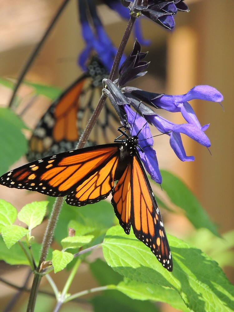 Feeding Monarchs by LegacyArt