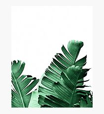 BANANA LEAF Photographic Print