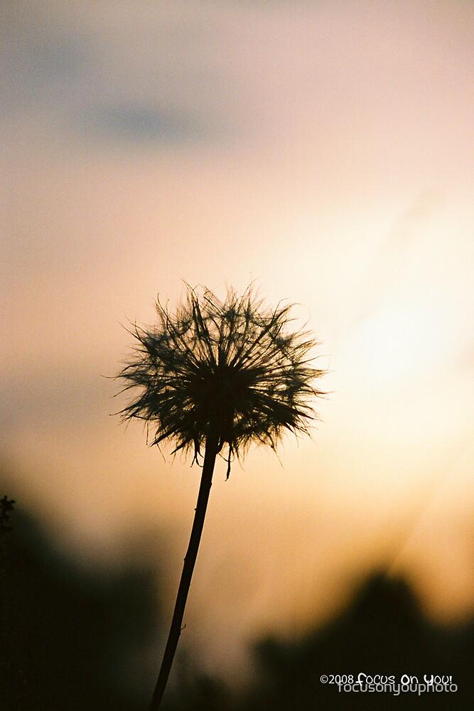 dandelion at sunset by focusonyouphoto