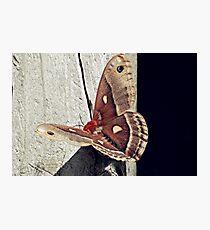 Moth-3 Photographic Print