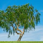 Just One Tree by Randy Turnbow