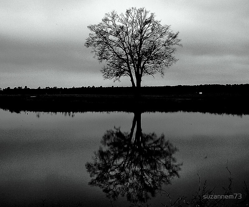 Lone Tree by suzannem73