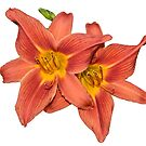 Pair of Orange Day Lilies by Bonnie T.  Barry