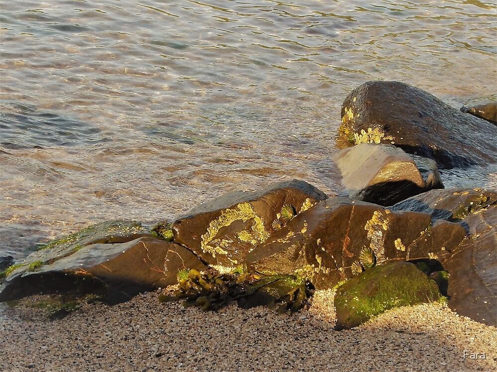 Shore Delights by Fara