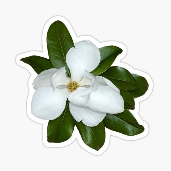 Southern Magnolia Blossom Sticker