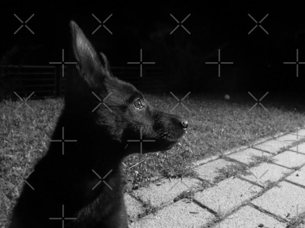 Black puppy in the garden by Althea Gianera