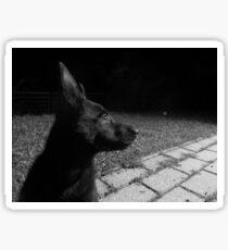 Black puppy in the garden Sticker