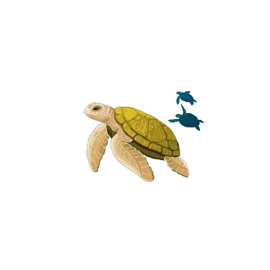 Turtle Family by jensgill