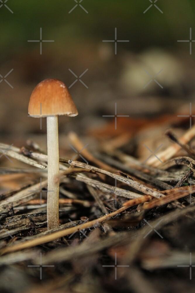 Little mushroom by Althea Gianera