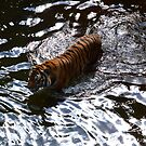 Swimming Tiger by Minivillage