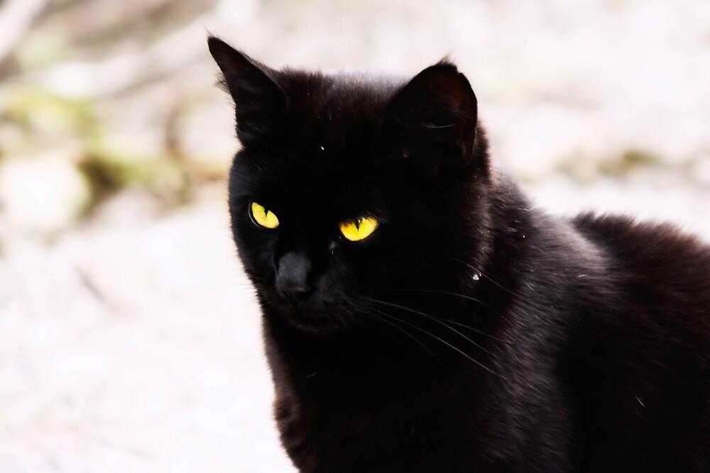 Female black cat by franceslewis