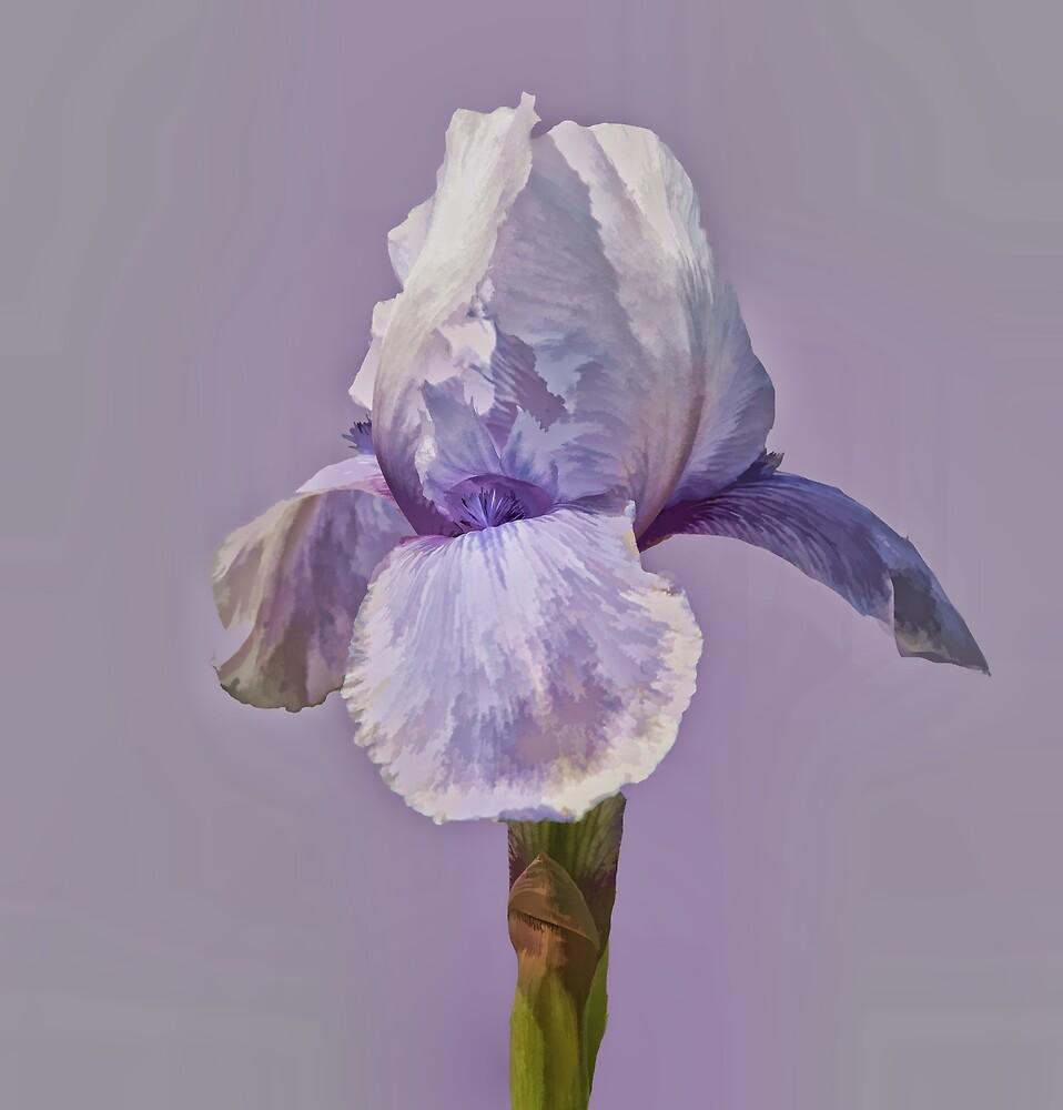 Lavender by Floyd Hopper